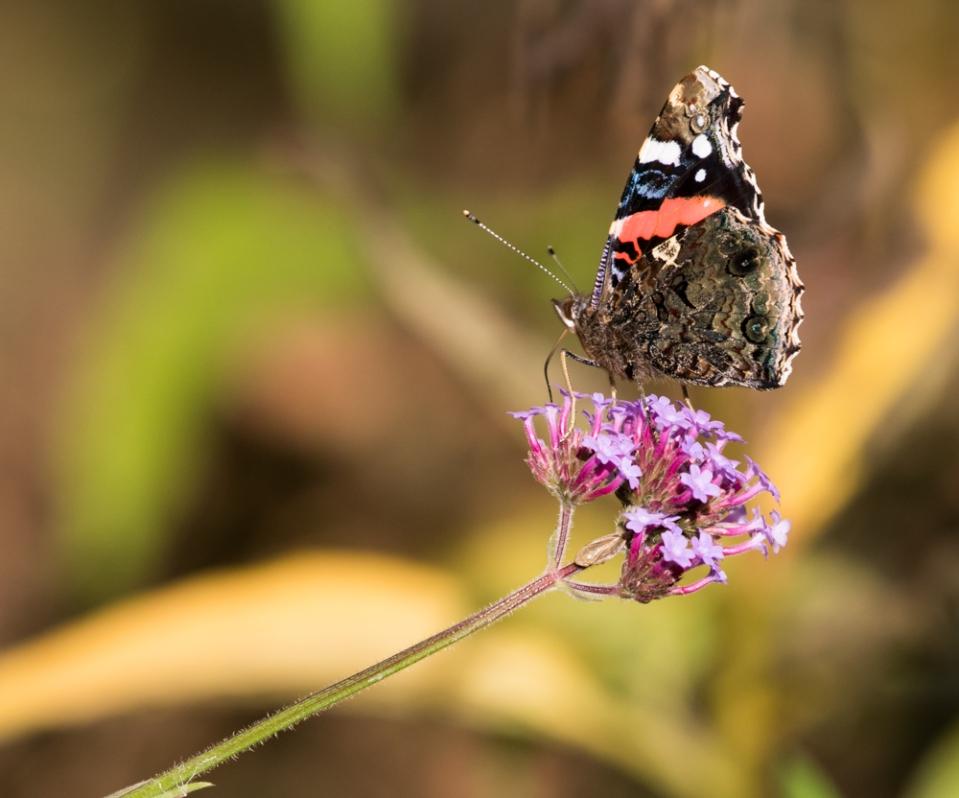 yv_butterflies-7861