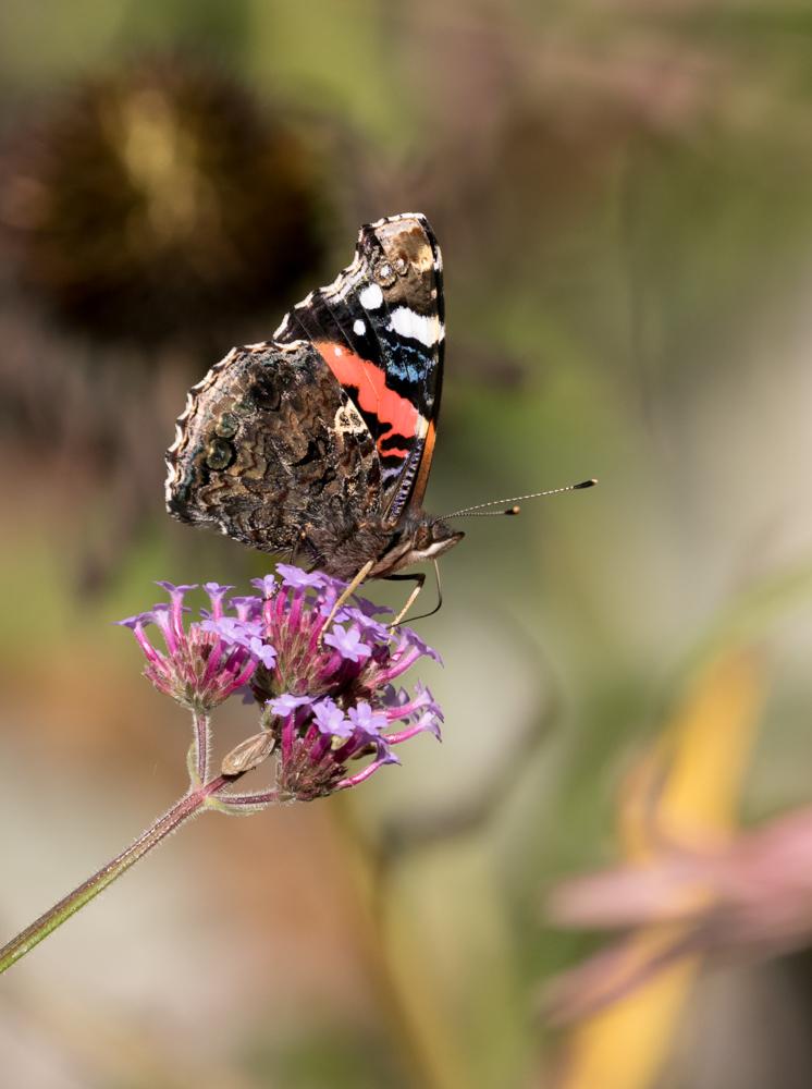 yv_butterflies-7866