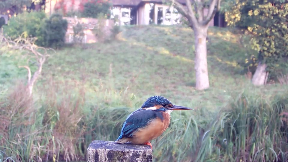kingfisher-7-38am-dull-light_00000
