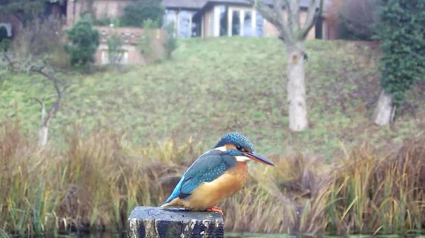 kingfisher-vivotek-2016-12-10-09-07-44-406