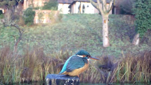 kingfisher-vivotek-2016-12-11-08-18-54-687