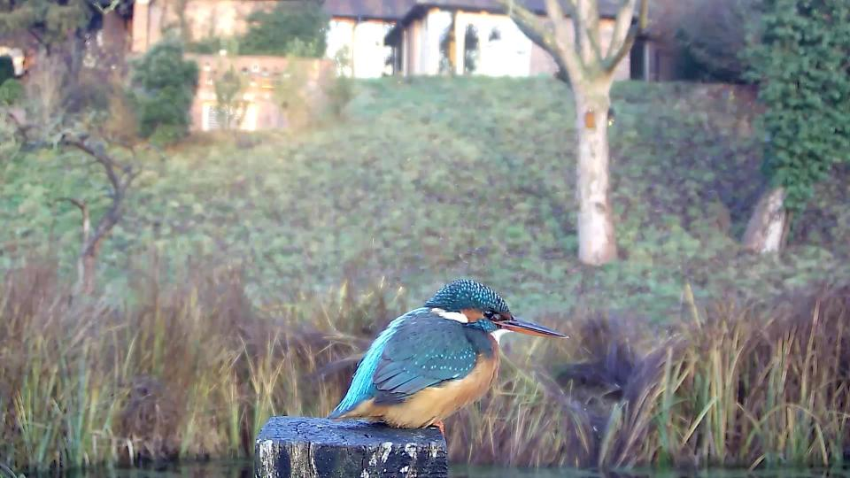 kingfisher-vivotek-2016-12-11-08-18-54-687