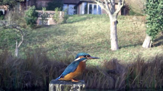 kingfisher-vivotek-2016-12-14-13-28-42-027