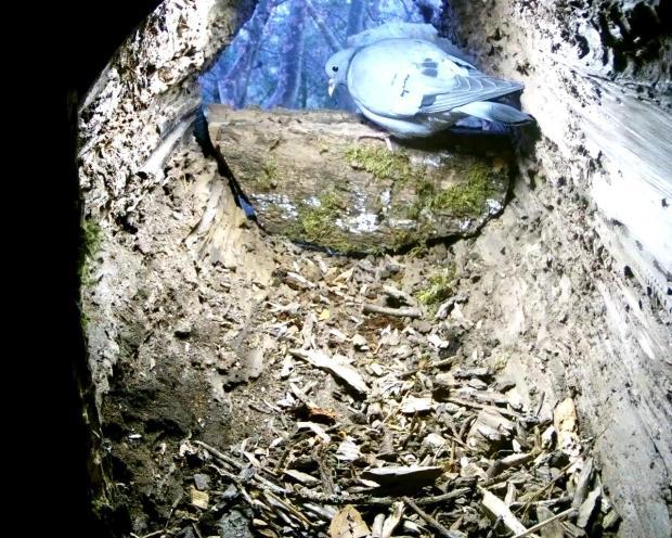 tawny-stump-2016-12-15-08-29-24-326