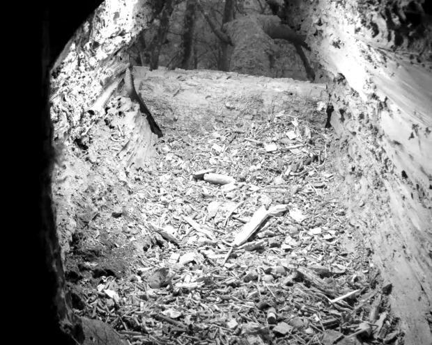 tawny-stump-2016-12-15-15-55-00-954