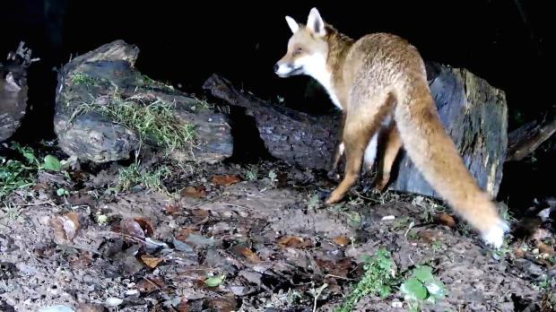 vivotek-badger-feeding-2016-12-11-00-34-20-308