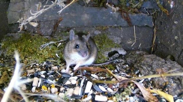 wildlife-pond-mammal-box-hd-2016-12-14-05-32-11-230