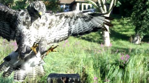 Kingfisher VIVOTEK 2017-08-15 08-18-27.293