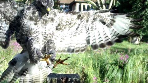 Kingfisher VIVOTEK 2017-08-15 08-18-27.359