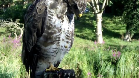 Kingfisher VIVOTEK 2017-08-15 08-21-34.739