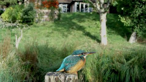 Kingfisher VIVOTEK 2017-10-04 09-06-58.458