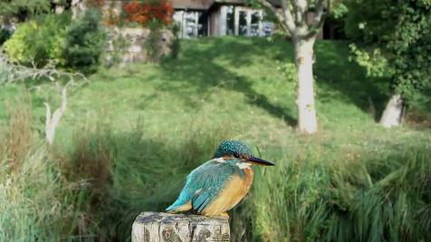 Kingfisher VIVOTEK 2017-10-04 09-07-38.594