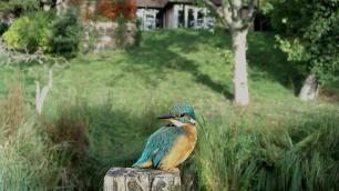 Kingfisher VIVOTEK 2017-10-04 09-07-59.895