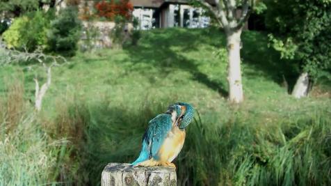 Kingfisher VIVOTEK 2017-10-04 09-14-08.578