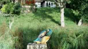 Kingfisher VIVOTEK 2017-10-04 09-14-11.711