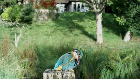 Kingfisher VIVOTEK 2017-10-04 09-16-03.442