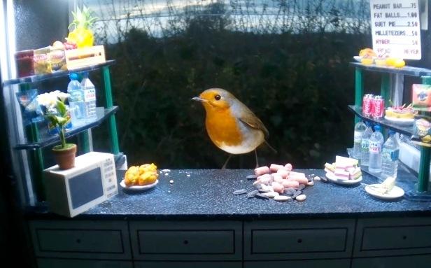 Evening robin 18th Nov_