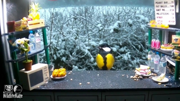 SnackBar_Snowy robin plus tits_00000