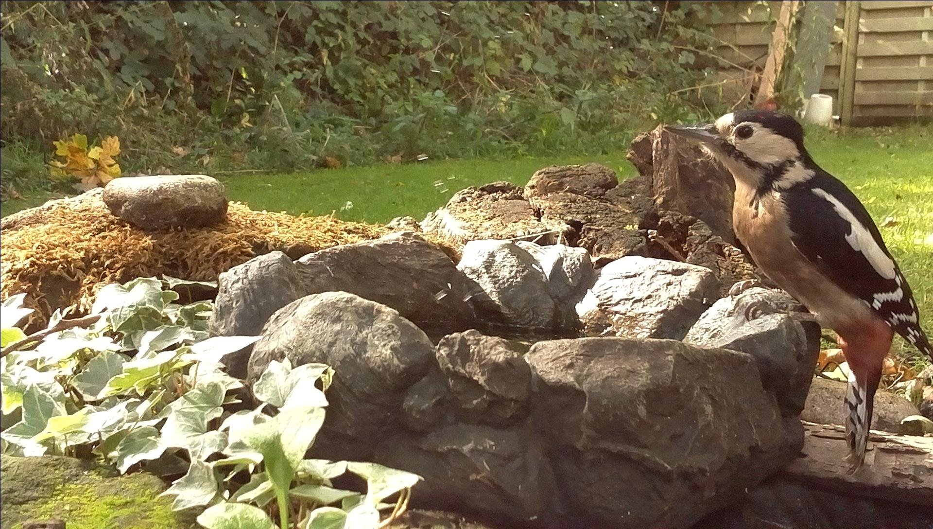 Setting up a 'My Naturewatch' Raspberry Pi Camera   www wildlifekate