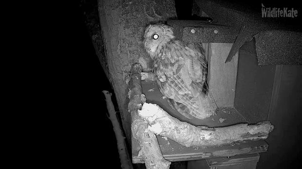 Tawney webcam