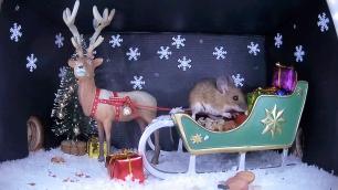 Christmas Wood mouse 1_WildlifeKate