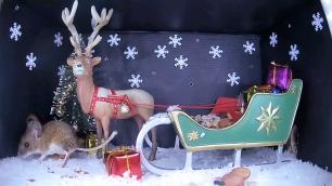 Christmas Wood mouse 5_WildlifeKate