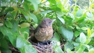 April 18th_chick 1 fledge 07_00000