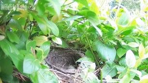 April 18th_chick 2 fledge 09_00001